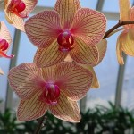 Orchid photo by Garden Witch