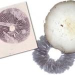 www.spores101.com